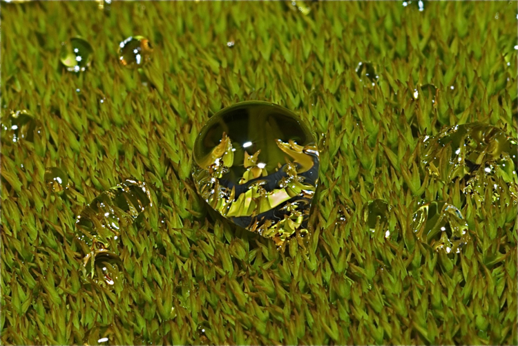 Water drop on winter moss