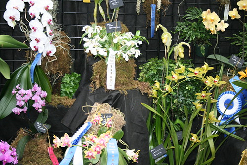Orchids in competition
