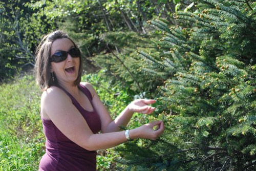Picking Spruce Tips - 1