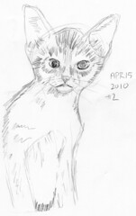 Cute kitten, drawn life on April 15, 2010 (sketch 2)