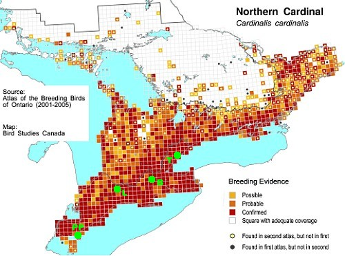 Northern Cardinal map from Ontario Breeding Bird Atlas