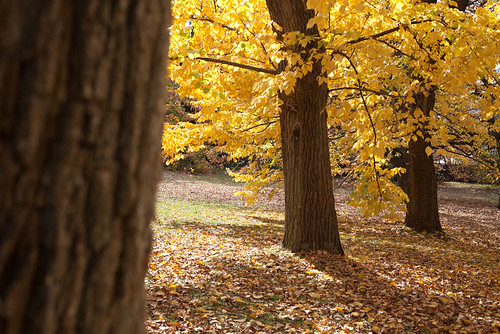 """Fall"" at the Royal Hobart Botanical Gardens by BrendanDavey"