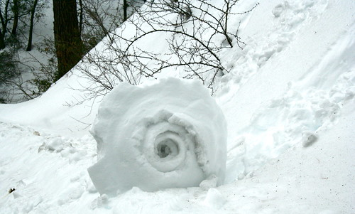 Snow Snails