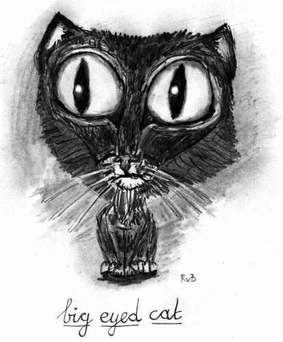 Big eyed cat