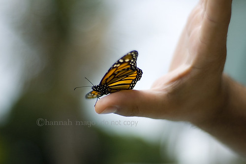 butterfly release no.2