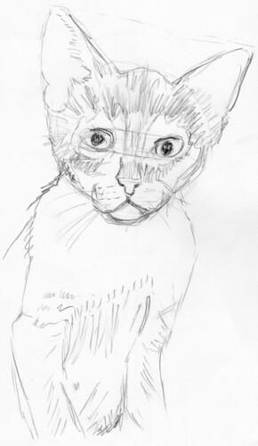 Cute kitten, drawn live on April 13, 2010 (sketch 3)
