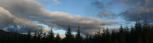 clouds and conifers