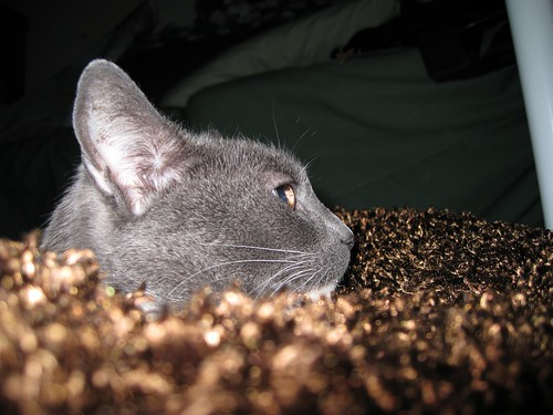 Fey's face in profile, while she is on her brown fuzzy bed.