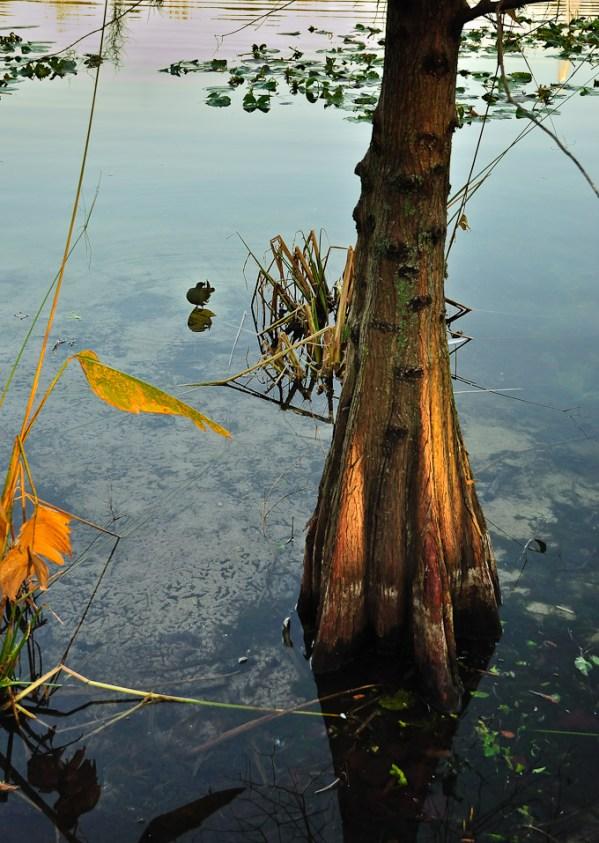 Lake Lily Park tree and bird at dawn