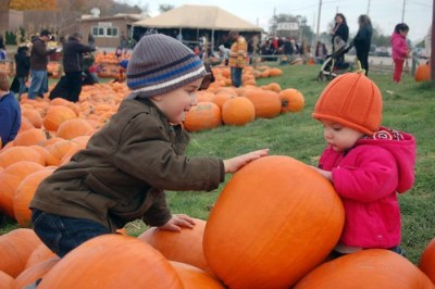 Jacob and Violet with the Pumpkins 2
