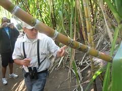 sugarcane!
