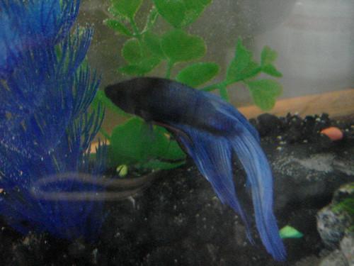 HEY I'M A FISH