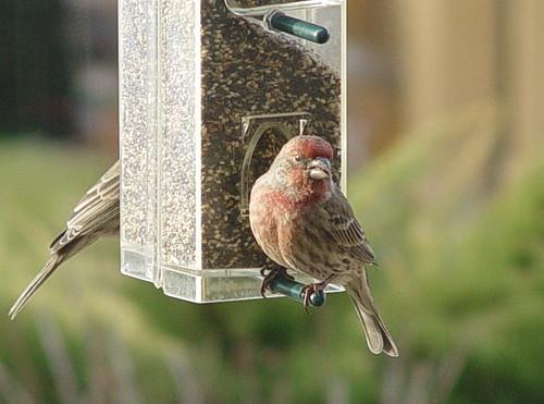 The Birds (2)...