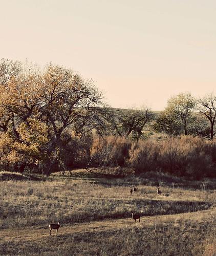 Deer in riverbed