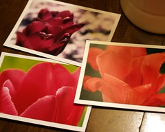 tulips postcards - set of 3