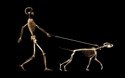 human and dog x ray