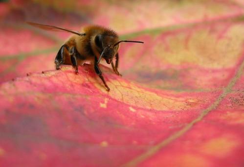Leafy Day by racheldragonfly