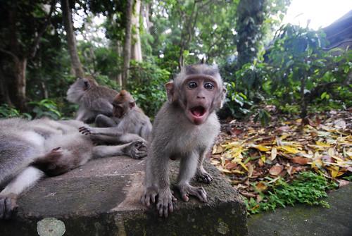 En Route: Monkeying Around In Bali