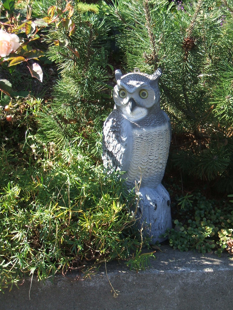 Whoooo's that in the garden?