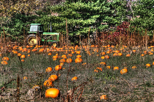The Lost Pumpkins