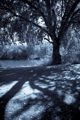 A la sombra