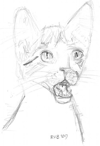 Drawing kittens, part 12