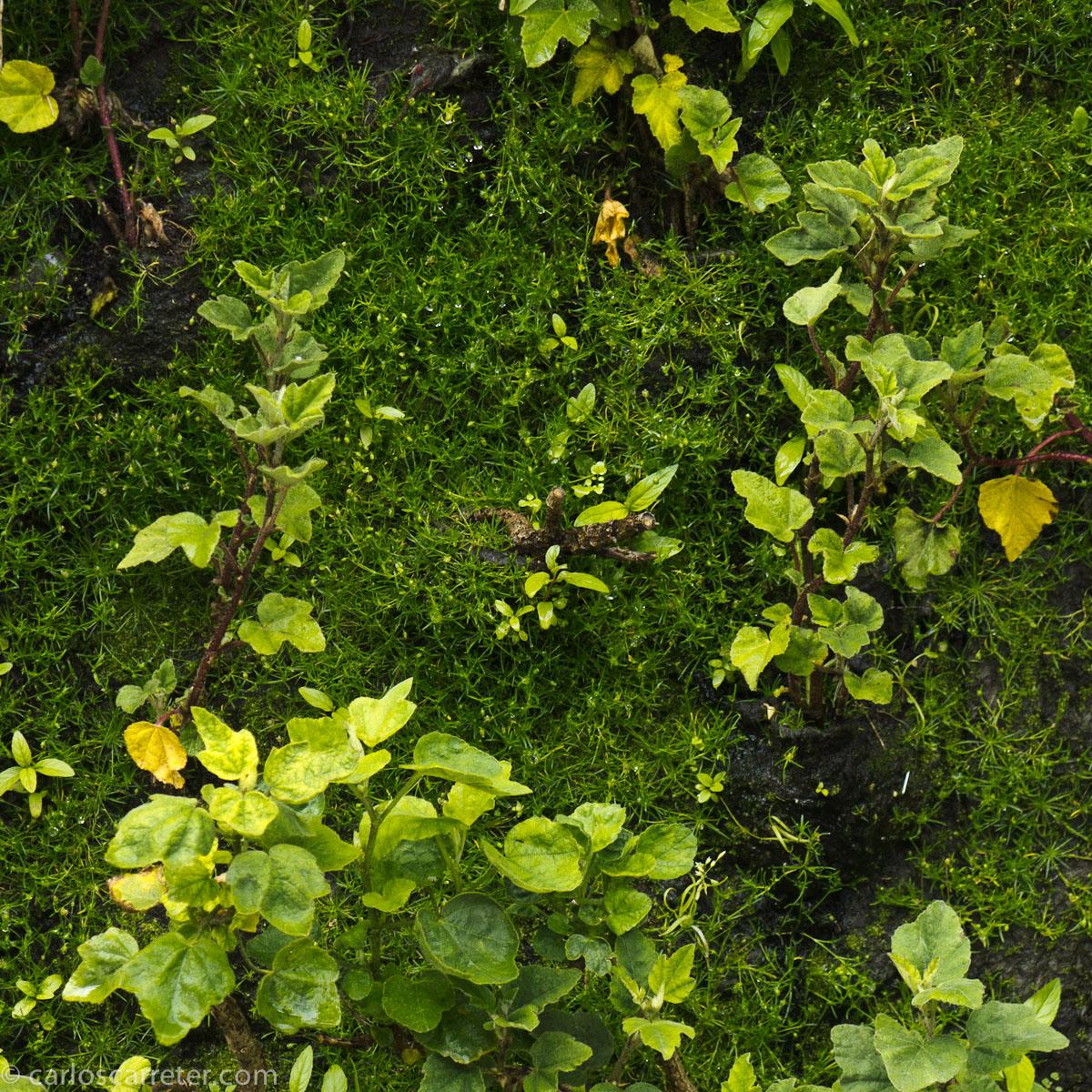 Jardín vertical (Caixaforum)