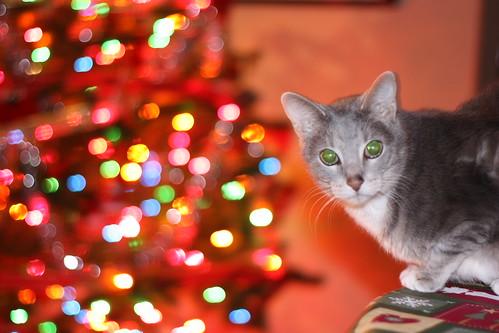 Pippin at Christmas 2009