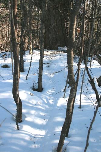 Trail to porcupine den site