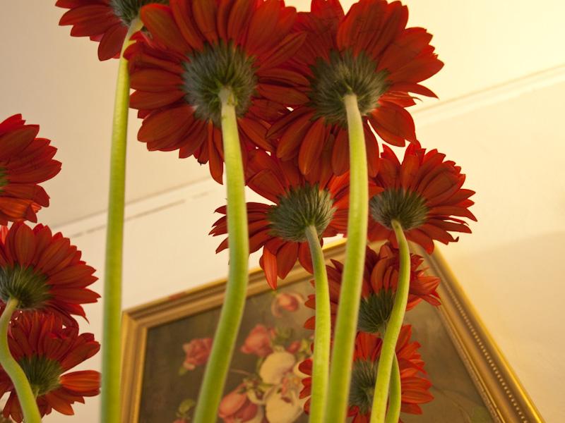 Flowers, Flowers