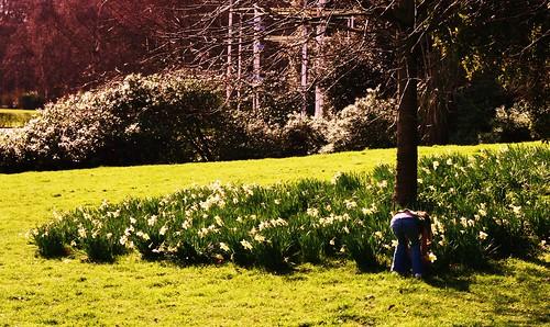 Spring Flowers in Battersea