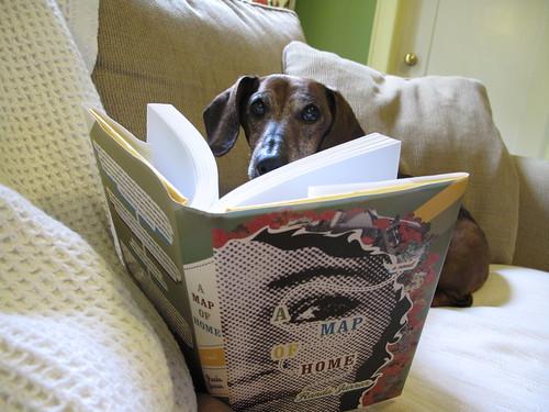 Scarlet reads A Map of Home by Randa Jarrar