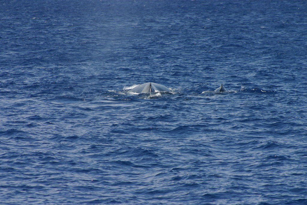 mama and baby whale