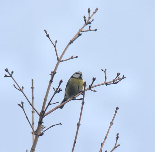 Garden Birdwatch (2)