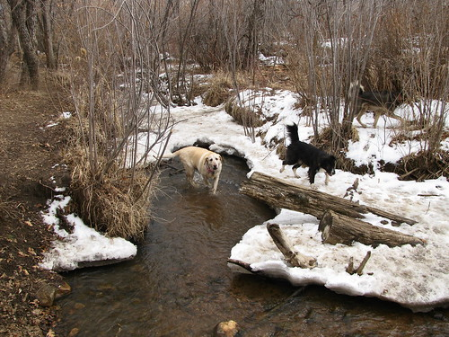 Sadie in stream with friends