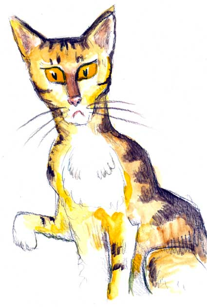 yellowcat-5