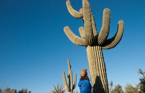 Sizing up the Cacti