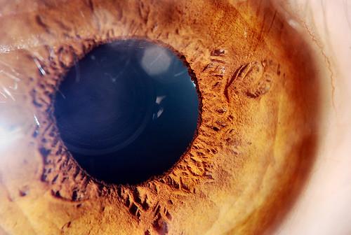 HUman Eye Extreme Macro