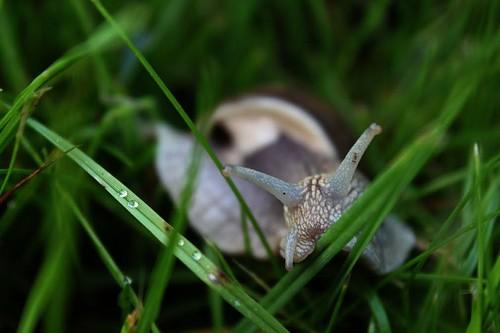 ślimak, snail