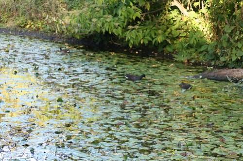 20090919 Edinburgh 20 Royal Botanic Garden 507