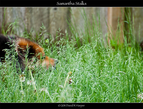 Samantha Stalks by Echo9er