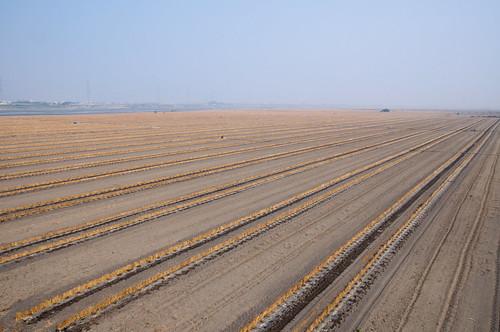 Endless Farm