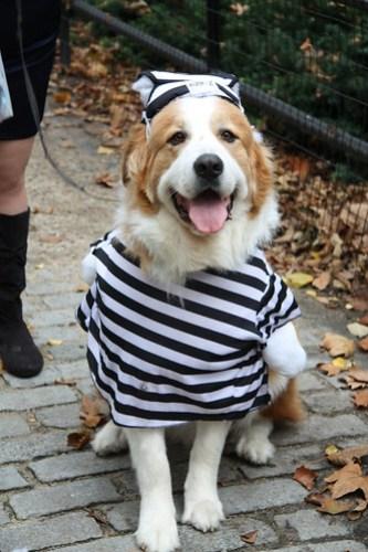 Jail Dog