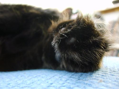 paw_closeup