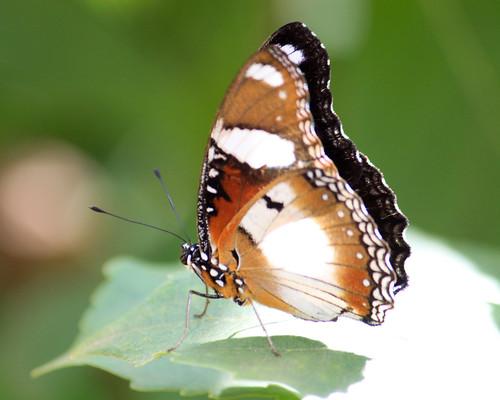 Butterfly at Butterfly Garden - 1