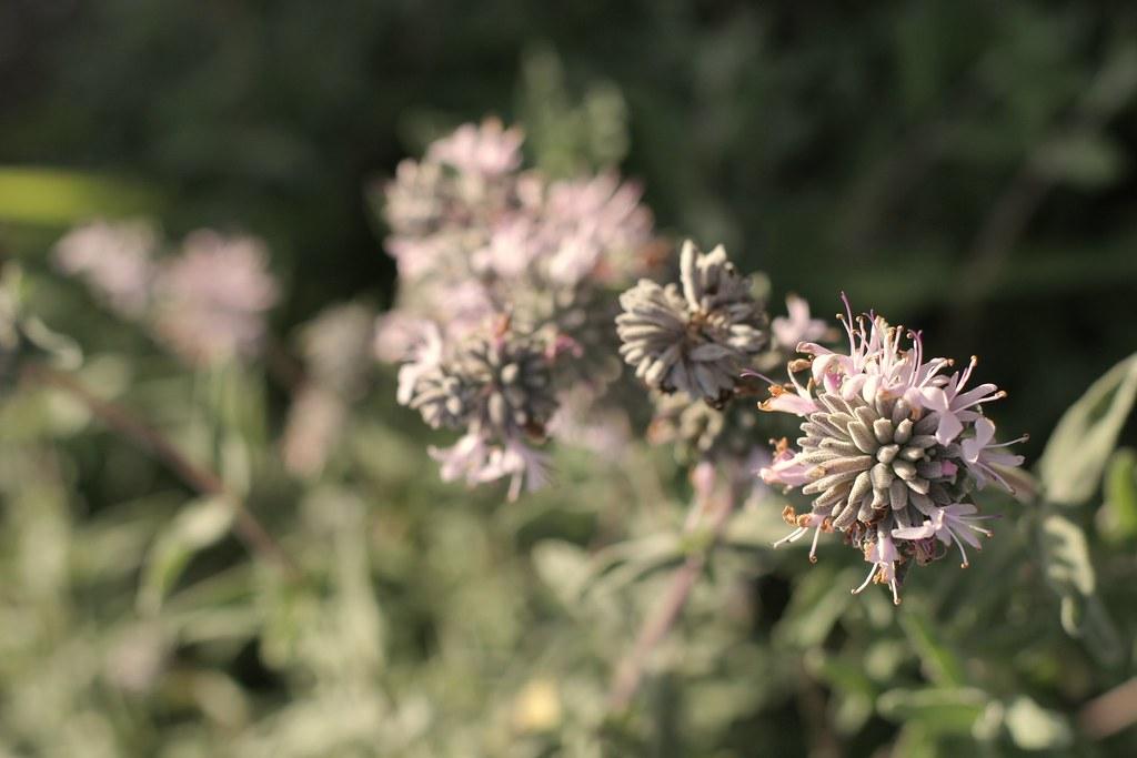 Unknown purple wildflower