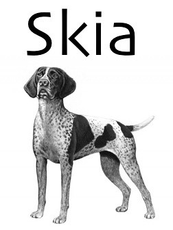grayscale German Shorthaired Pointer, captioned Skia in Skia font