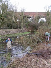 Clearing the fishponds