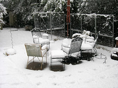 Snow Day Dallas,TX      02-11-10