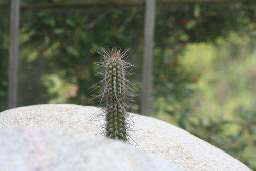 20090919 Edinburgh 20 Royal Botanic Garden 297